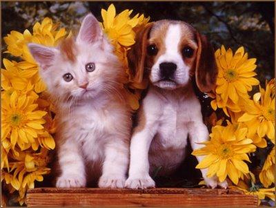 منذ متى و القطط تتصالح مع الكلاب؟ 9380.imgcache